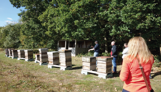 Richard's apiary